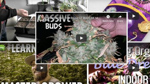 Marijuana Growing Videos