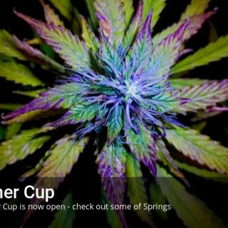 Summer Cup Now Open - Win Free Cannabis Seeds