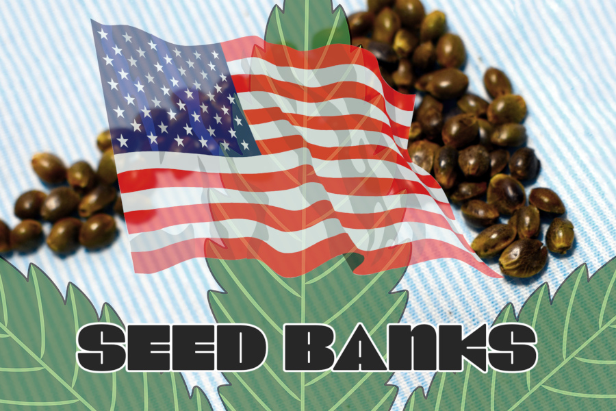 How to Buy Marijuana Seeds Shipped into the United States (Guide)