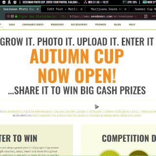 autumn cup now open seedsman photo cup