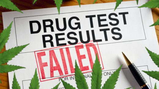 Are marijuana growers in danger of failing a drug test?