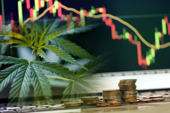 green rush marijuana industry stocks
