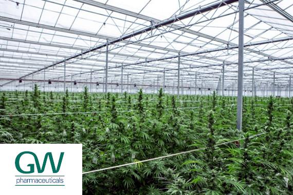 GW Pharma Cannabis Plants
