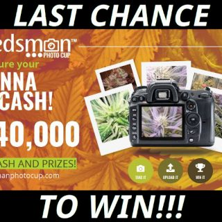 Last Chance to Win Weed Seeds and Cash at the Seedsman Photo Cup